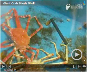 crab-shedding